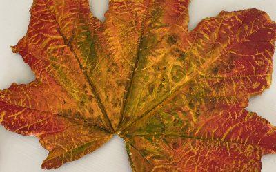 Betongblad i höstens färger rejäla och arbetade 120:-